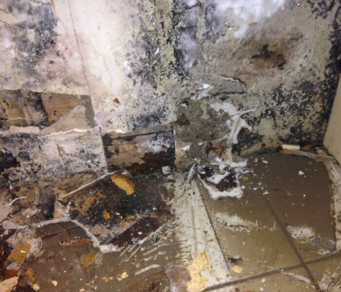 Mold Damage in Pacific, MO
