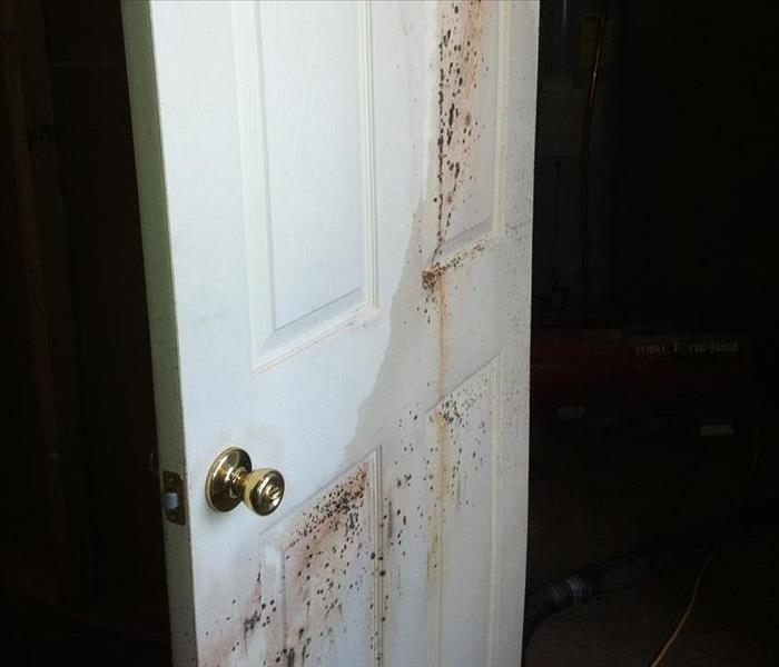 Water / Mold Damage in New Haven, MO