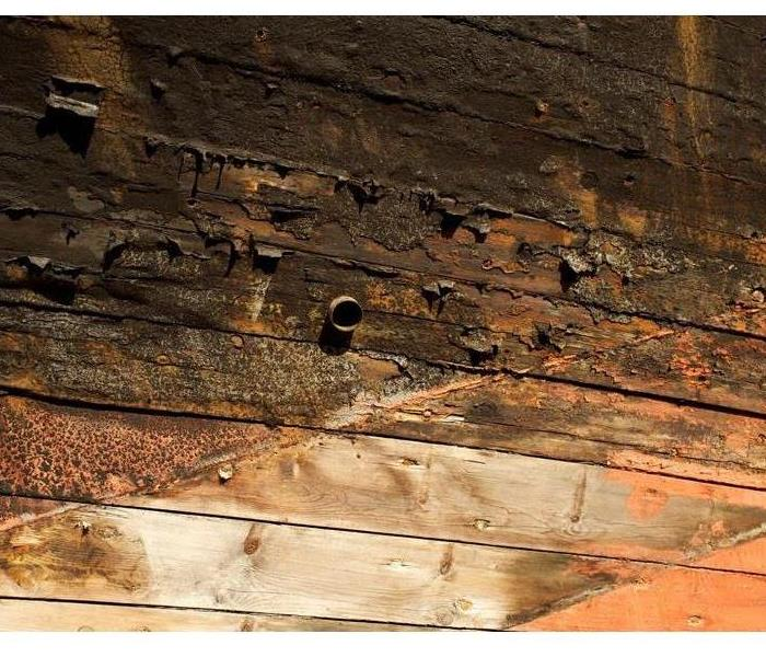 Photo shows an example of dry rot