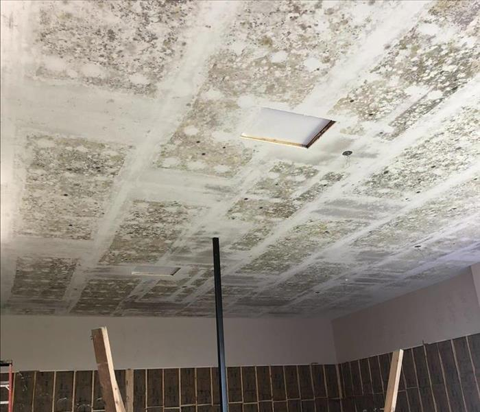 Visible mold growth on ceiling from a recent job.