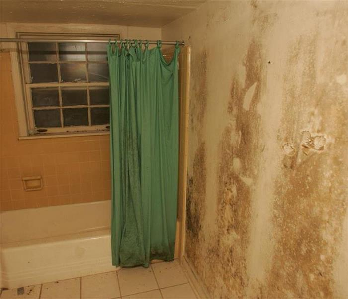Mold Remediation Mold Basics