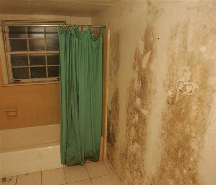 Mold Remediation The Mold Mitigation & Remediation Process